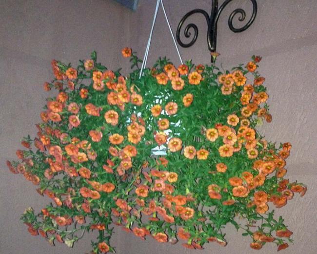 Кованая настенная цветочница
